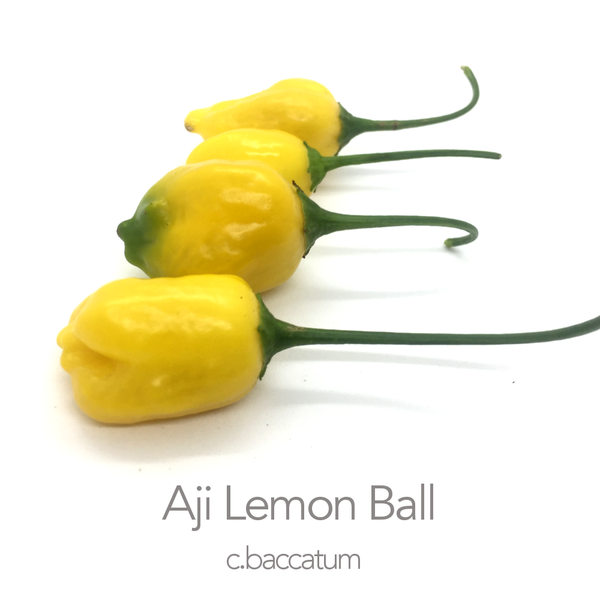 Aji Lemon Ball F2 Seed (c.baccatum)