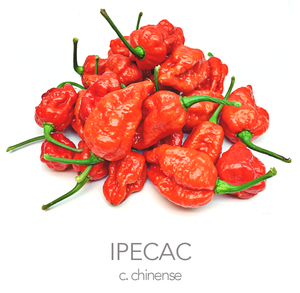 IPECAC Chilli Seeds (c.chinense)