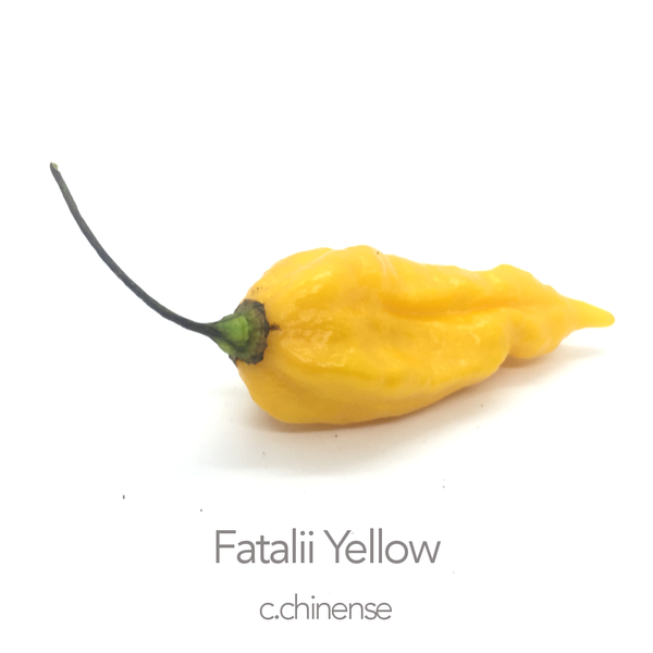 Fatalii Yellow Chilli Seeds (c.chinense)