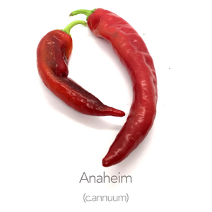 Anaheim Chilli Seeds (c.annuum)