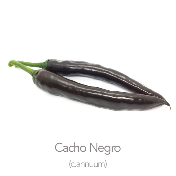 Cacho Negro Chilli Seeds (c.annuum)