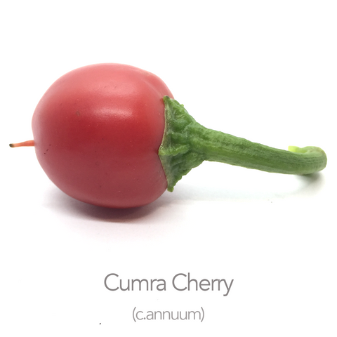 Cumra Cherry Chilli Seeds (c.annuum)