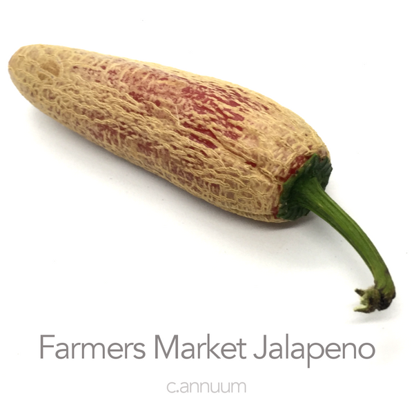 Farmers Market Japaleno Chilli Seeds (c.annuum)