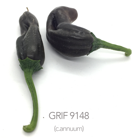 GRIF 9148 Chilli Seeds (c.annuum)