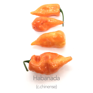 Habanada Chilli Seeds (c.chinense)