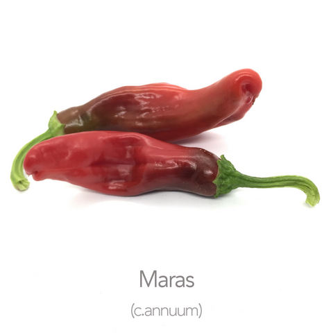 Maras Chilli Seeds (c.annuum)