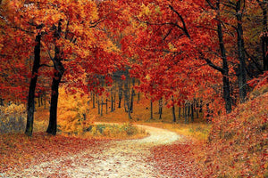 Autumn - Diamond Painting Kit