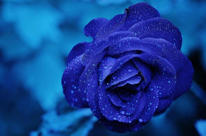 Blue Rose - Diamond Painting Kit