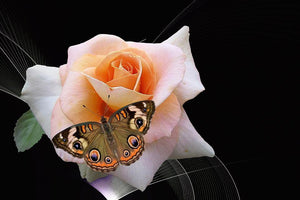 Butterfly Rose - Diamond Painting Kit