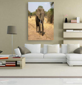 Desperate Elephant 5DArtist