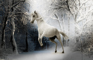 Horse Playing in Snow - Diamond Painting Kit