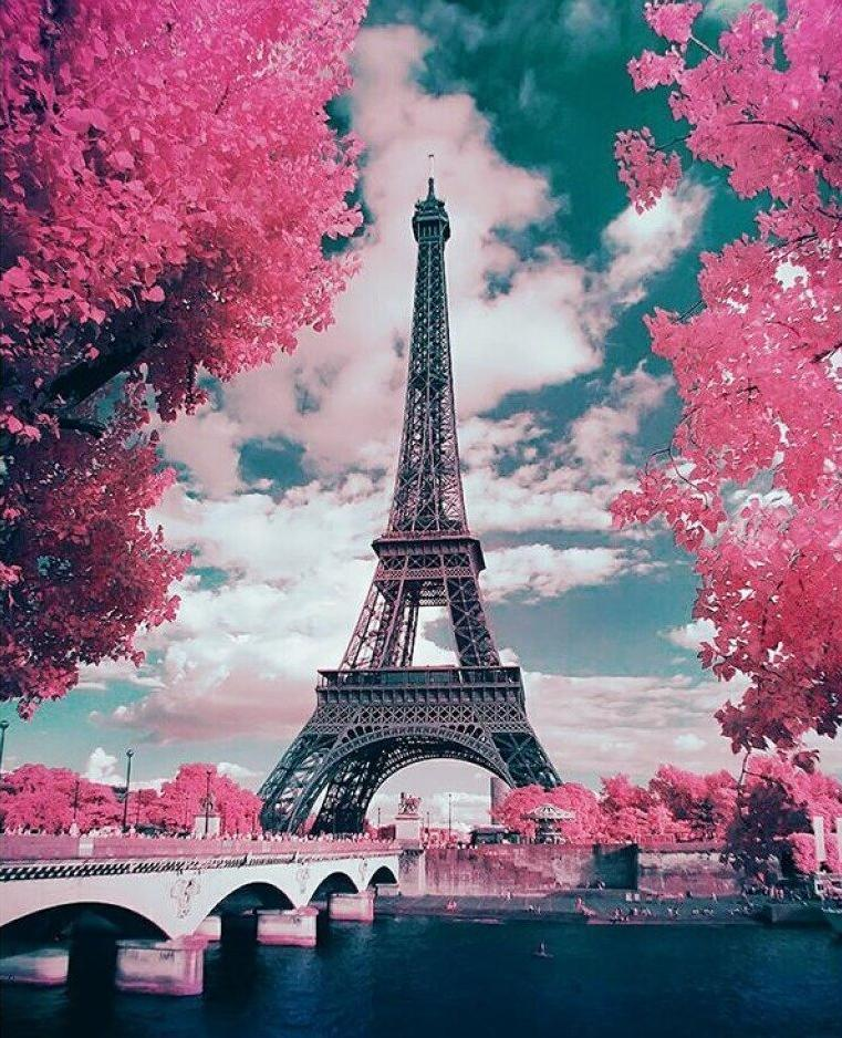 Pink Parisian Trees and Eiffel Tower - Special Offer