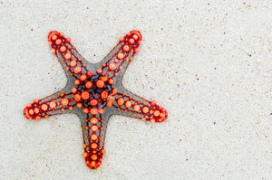 Red Starfish - Diamond Painting Kit