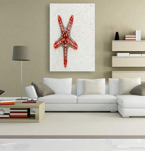 Red Starfish 5DArtist