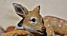 Roe Deer - Diamond Painting Kit