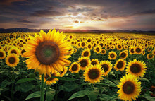 Sea of Yellow - by Kevin Carden Kevin Carden