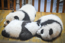 Sleeping Panda - Diamond Painting Kit