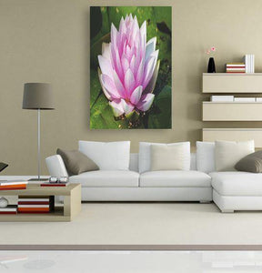 Water Lily 5DArtist