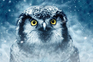 Winter Owl - Diamond Painting Kit