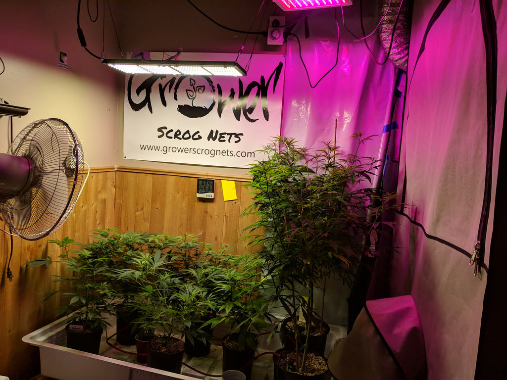 The cost of growing your own cannabis indoors.
