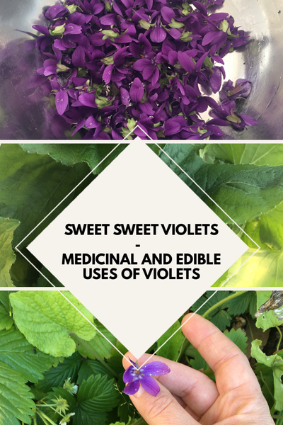 Sweet sweet Violet – medicinal and edible uses of Violets