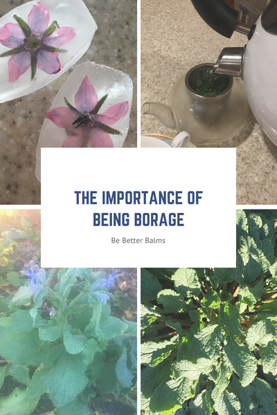 The importance of being Borage