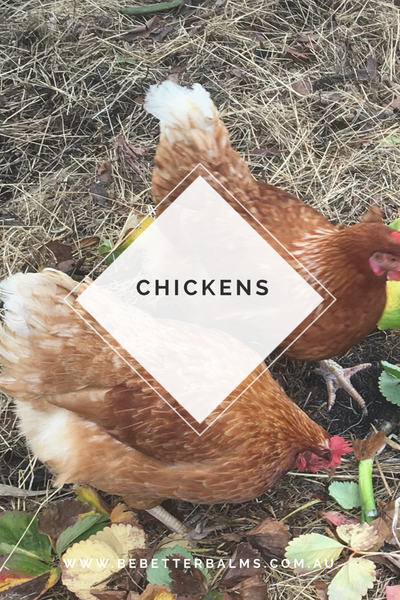 Why should you keep chickens?