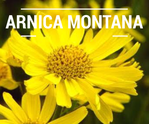 arnica for the skin