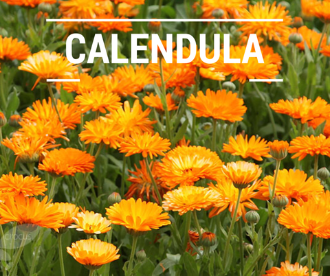 calendula for sensitive skin