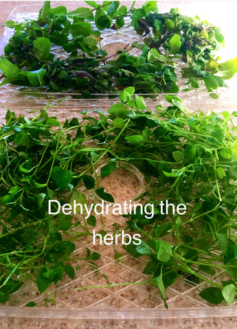dehydrating herbs at home