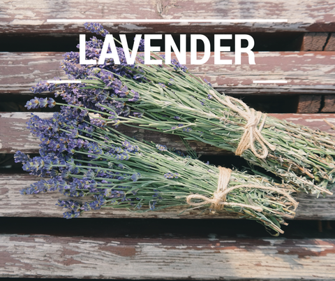 lavender for chickens
