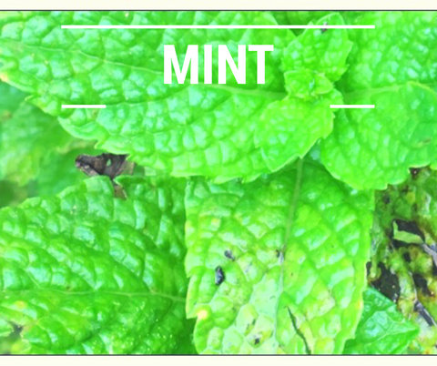mint for chickens