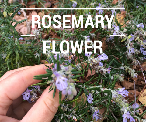rosemary for the skin