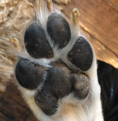 River and Birch Paw Pad Photo