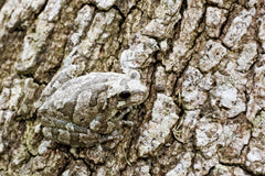 insect on bark of a tree