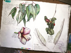 Botanical sketches by Dion Dior