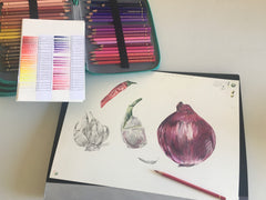 Onion drawing by Annette Dahler