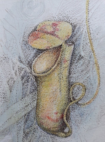 Nepenthes - pencil and ink by Lesley Wallington