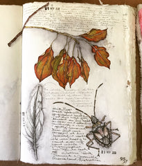 Leaf and bug drawing Dion Dior