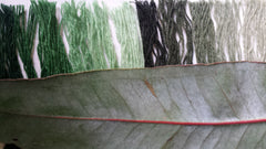 weaving with green threads and eucalypt leaf