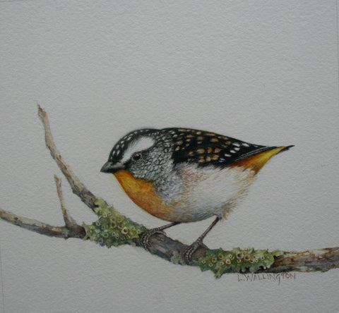 Spotted Pardalotes in Watercolour - with Lesley Wallington