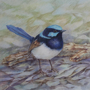 FAIRY WRENS IN WATERCOLOUR, 8 August 2020 - Beginners, Intermediate