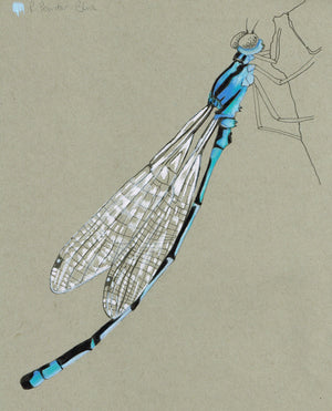TRANSPARENT AND SHINY INSECT WINGS WITH COLOUR PENCIL, 11 - 12 July 2020, Beginners - Intermediate