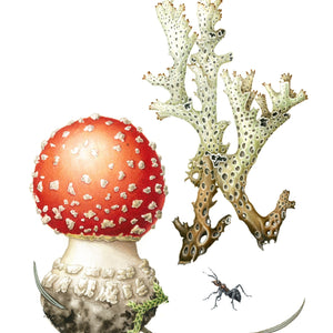Studio Workshop: FUNGI AND LICHENS IN WATERCOLOUR: BOTANICAL: MASTERCLASS:  4, 5 - 6 June 2021 - Intermediate - Advanced