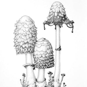 Online tutorial: FUNGI: DRAWING IN INK: 23 May 2021 - Beginners to Intermediate