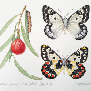 ONLINE TUTORIAL - ILLUSTRATING BUTTERFLIES IN WATERCOLOUR, 1 November 2020; Beginner to Intermediate