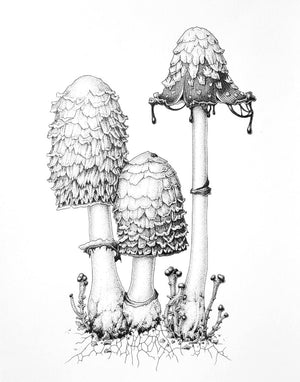 FUNGI - DRAWING IN INK - ONLINE TUTORIAL - 10.00am - 11.30am, Sunday 28 June 2020