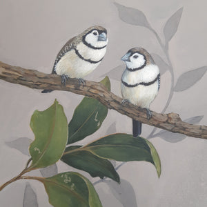 Studio Workshop: AUSTRALIAN BIRDS: DOUBLE BARRED FINCH: WATERCOLOUR STUDY: 15 May 2021 - Beginners to Intermediate