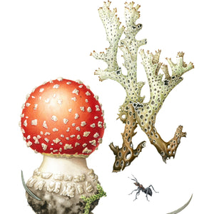 BOTANICAL WATERCOLOUR - FUNGI AND LICHENS MASTERCLASS, 15 - 16 August 2020, Intermediate