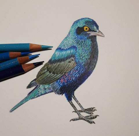 Glossy and Metallic - in Colour Pencil with Janet Matthews (2-day workshop)